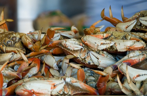 dungeness crab sierra nevada celebration food news