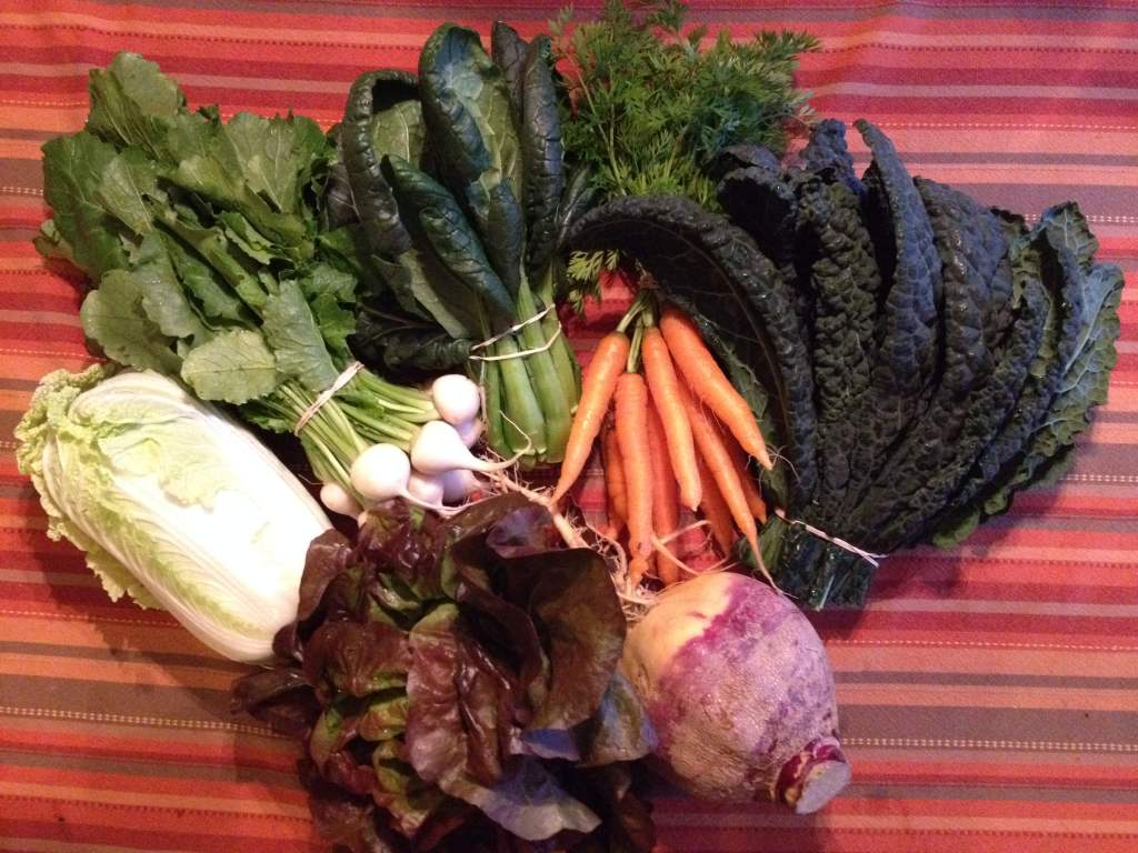rutabaga, Napa cabbage, Hakurei turnips, tatsoi, kale, carrots, lettuce