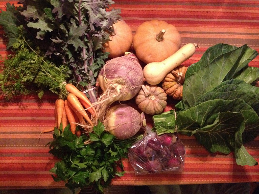 Our CSA share - carrots, kale, collards, pie pumpkins, black futsu squash, rutabagas, butternut squash, parsley and beets