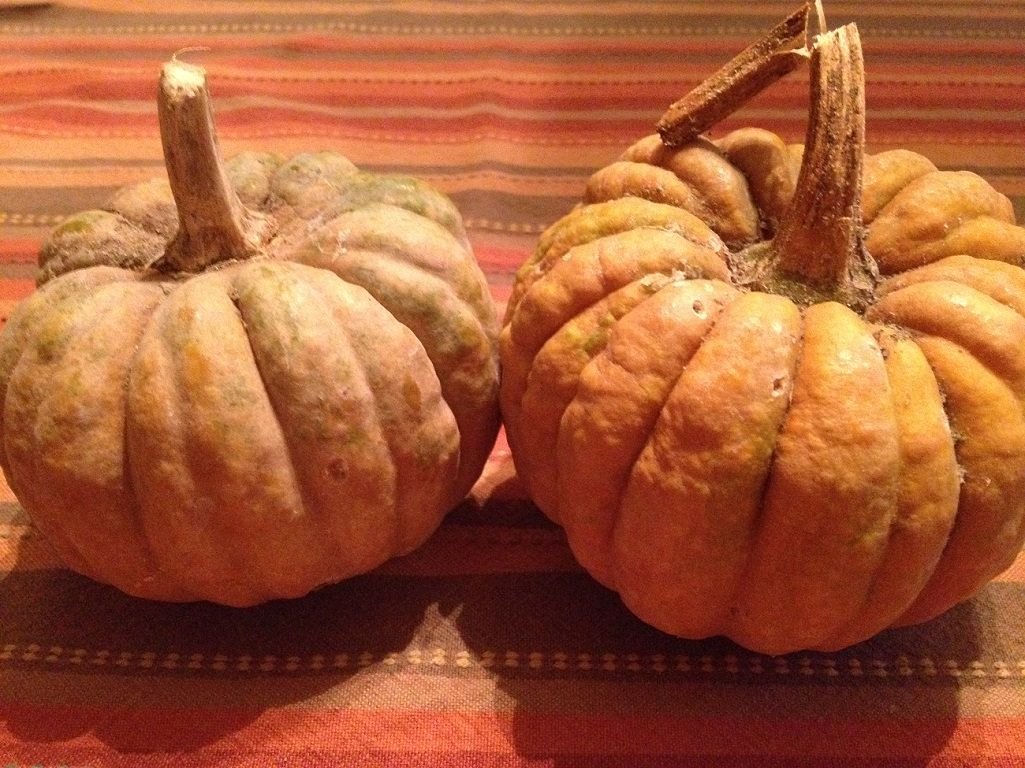 Black Futsu Squash | Grabbing the Gusto