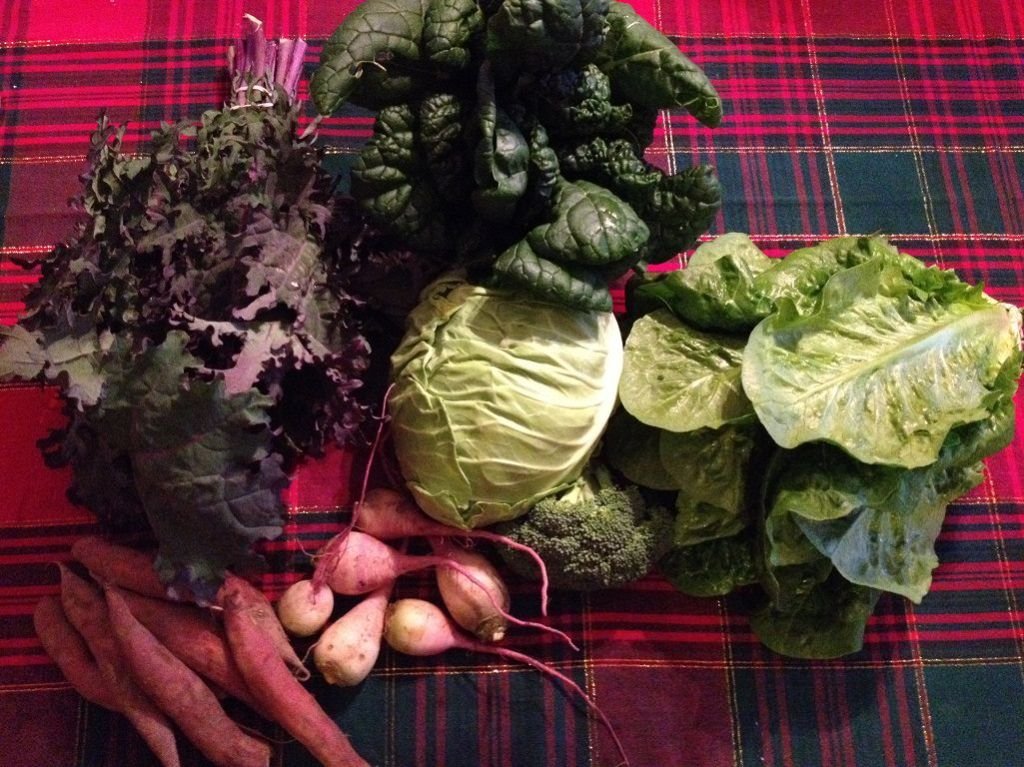 Our CSA share from In Good Heart Farm | Grabbing the Gusto