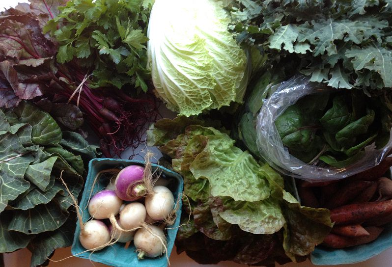 Our CSA Share | Grabbing the Gusto