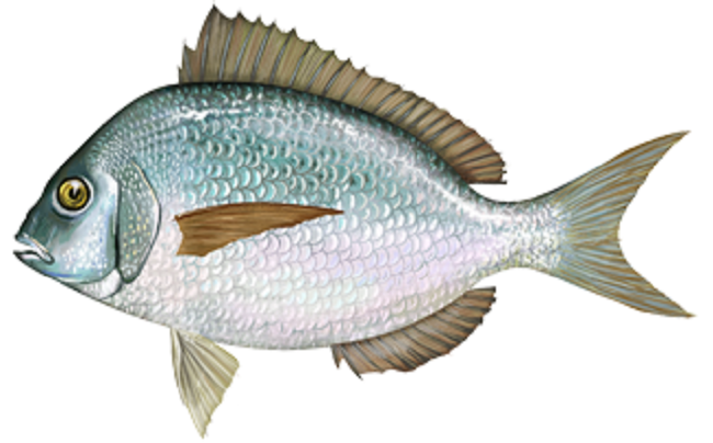 porgy recipe
