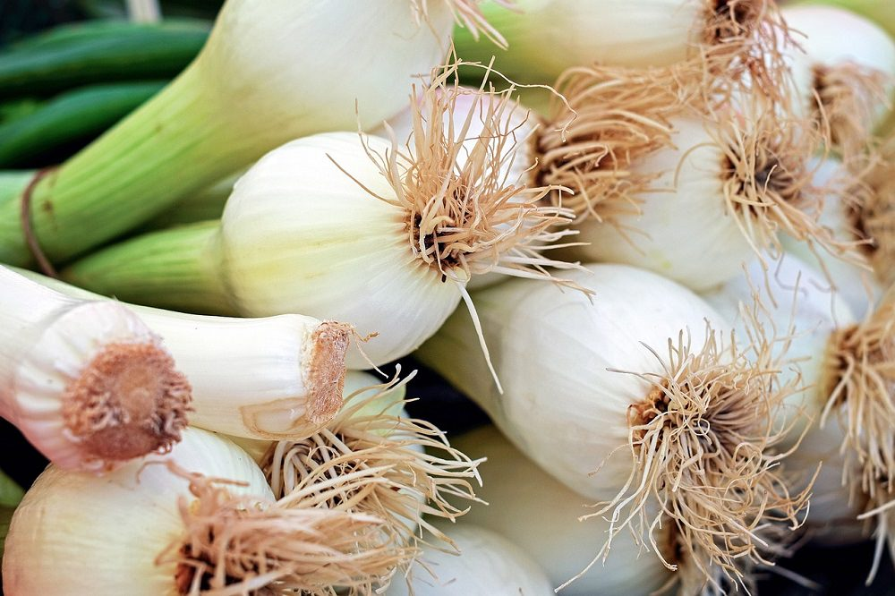 spring onions, menus, recipes, ebook deals