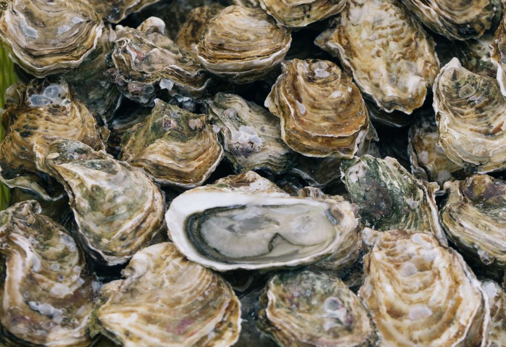 Oysters -- Menu ideas for chicken, prosciutto, sage, striped bass, kale, sweet potatoes, shrimp, pizza, and oysters