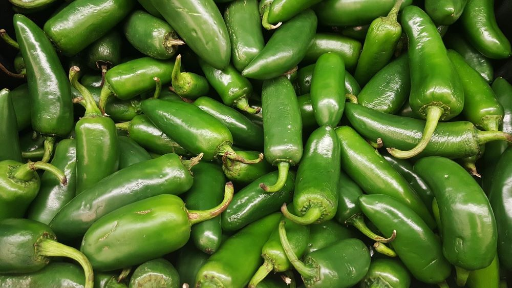 Jalapenos - Menu ideas and recipes for ground chorizo, sweet potatoes, greens, striped bass, jalapeño, Brussels sprouts, shrimp, collards, potatoes, and cauliflower
