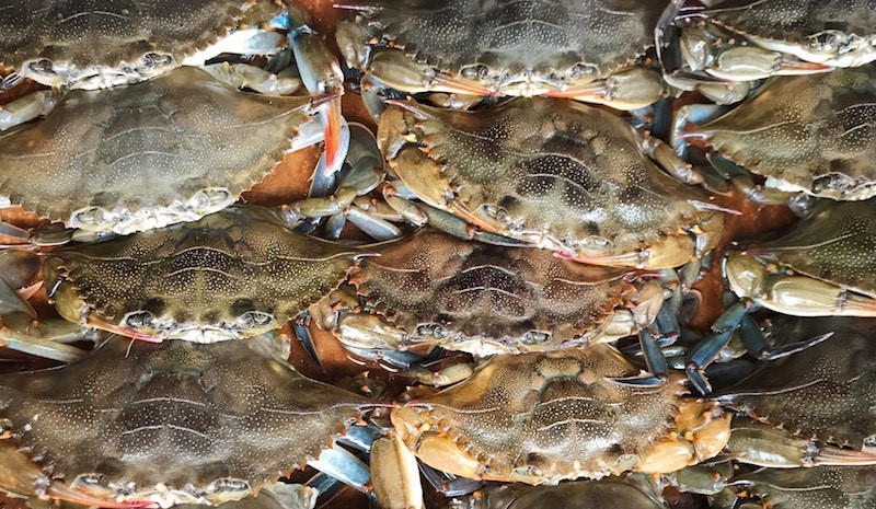 soft shell crabs - Menu ideas and recipes for soft shell crabs, greens, speckled sea trout, pecans, veggies and sourdough